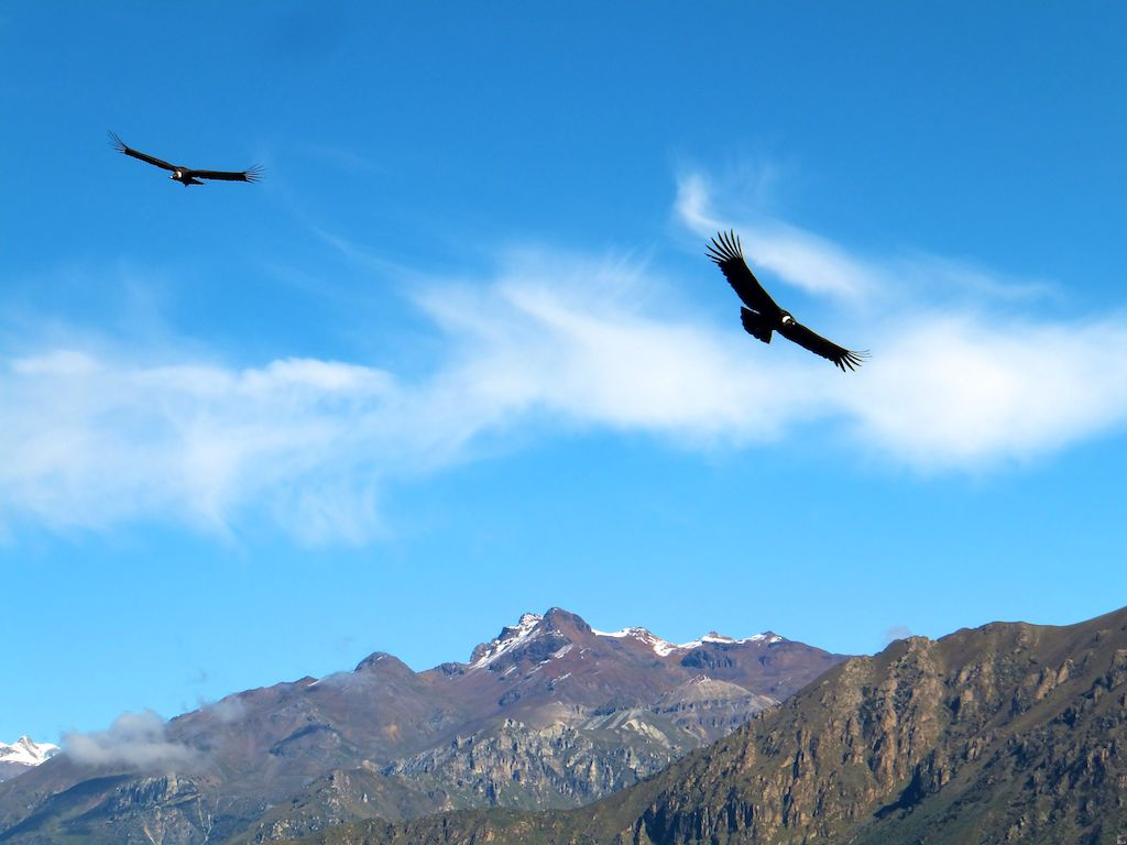 Colca Canyon & Arequipa