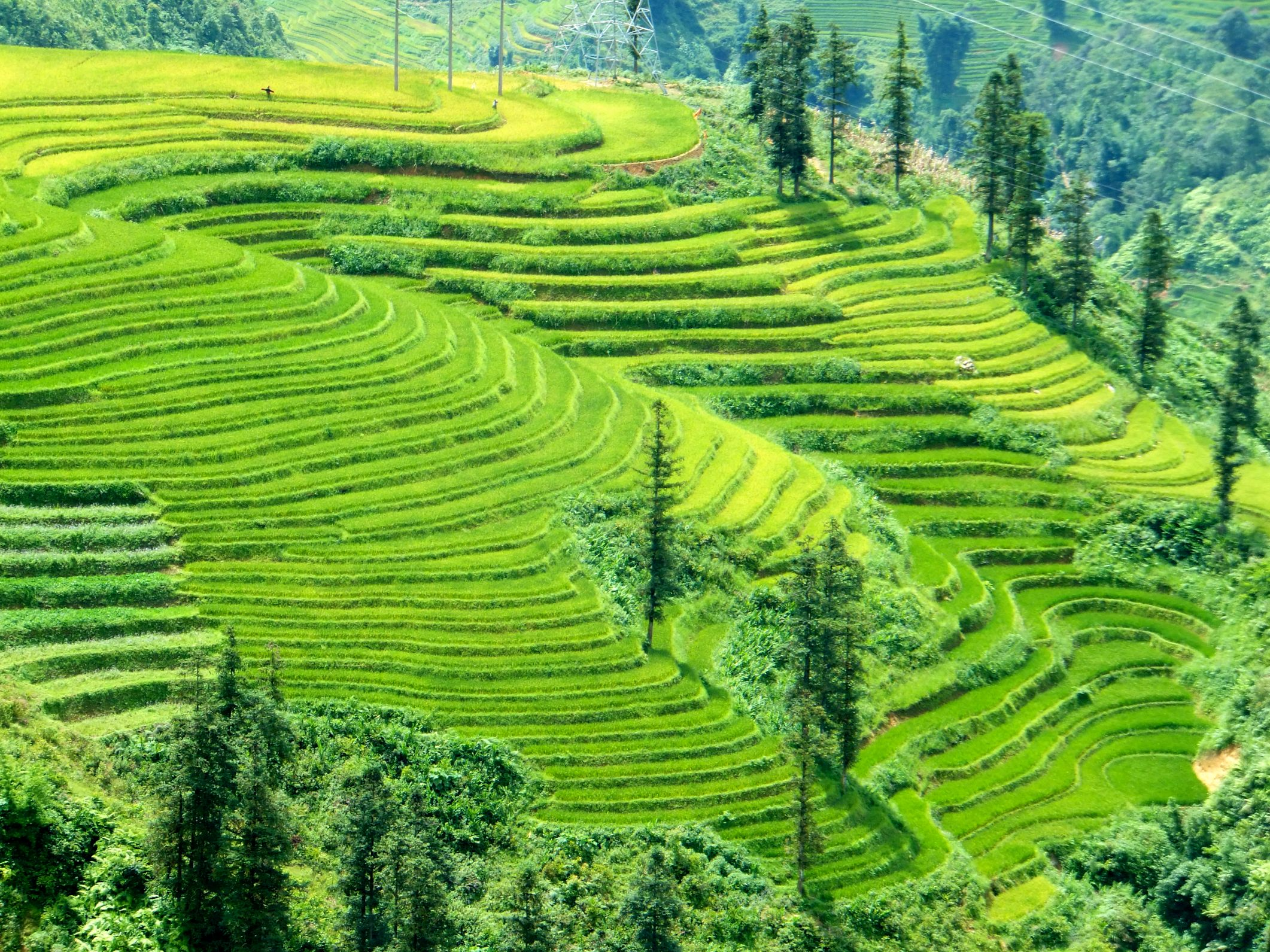 Die Reisfelder bei Sa Pá
