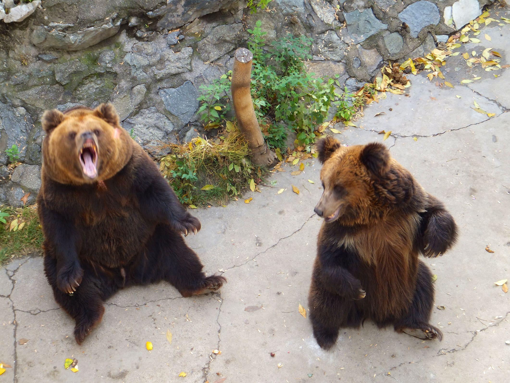 Der Pekinger Zoo gleicht einer Tierquälerei