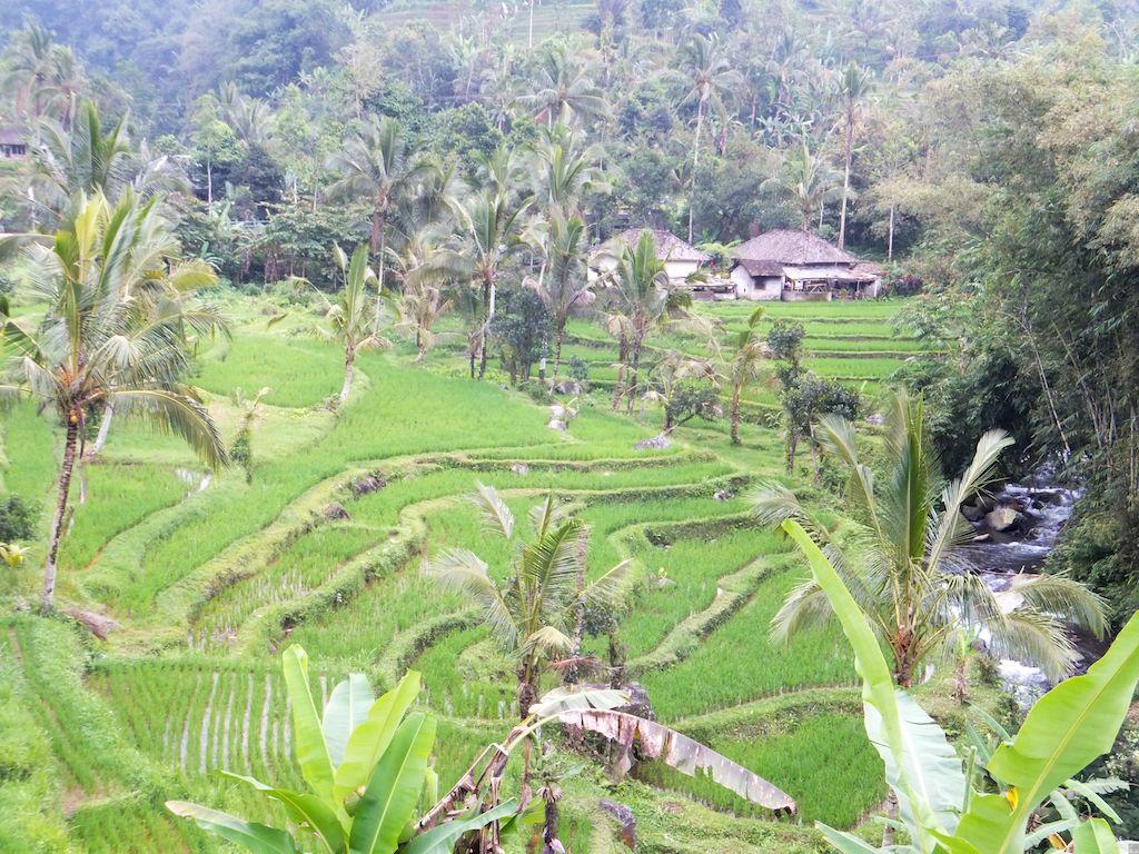 Tempel Tanah Lot und die Reisterrassen von Jatiluwih