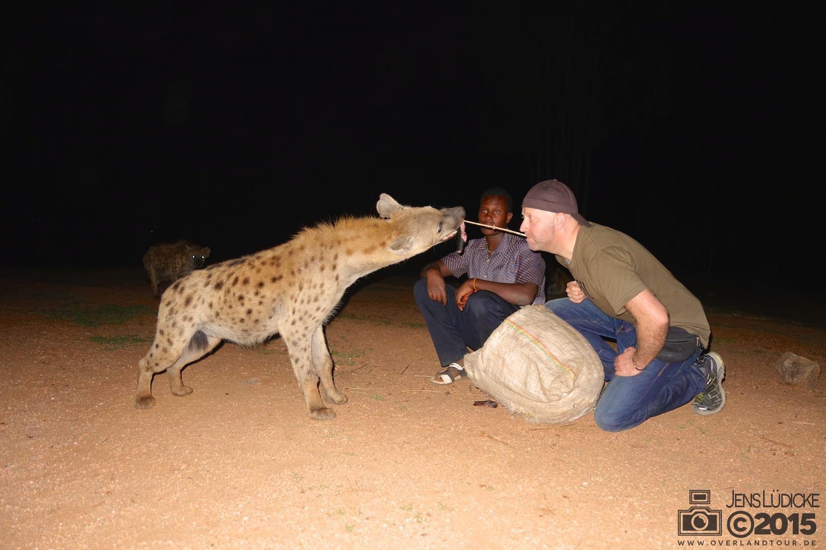 Mit Hyänen zum Dinner