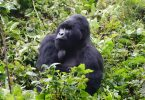 Mgahinga Gorillas National Park | Uganda