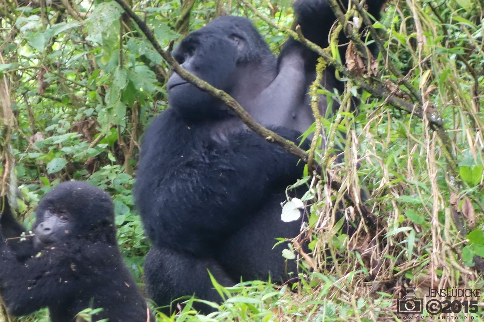 Mgahinga Gorillas National Park