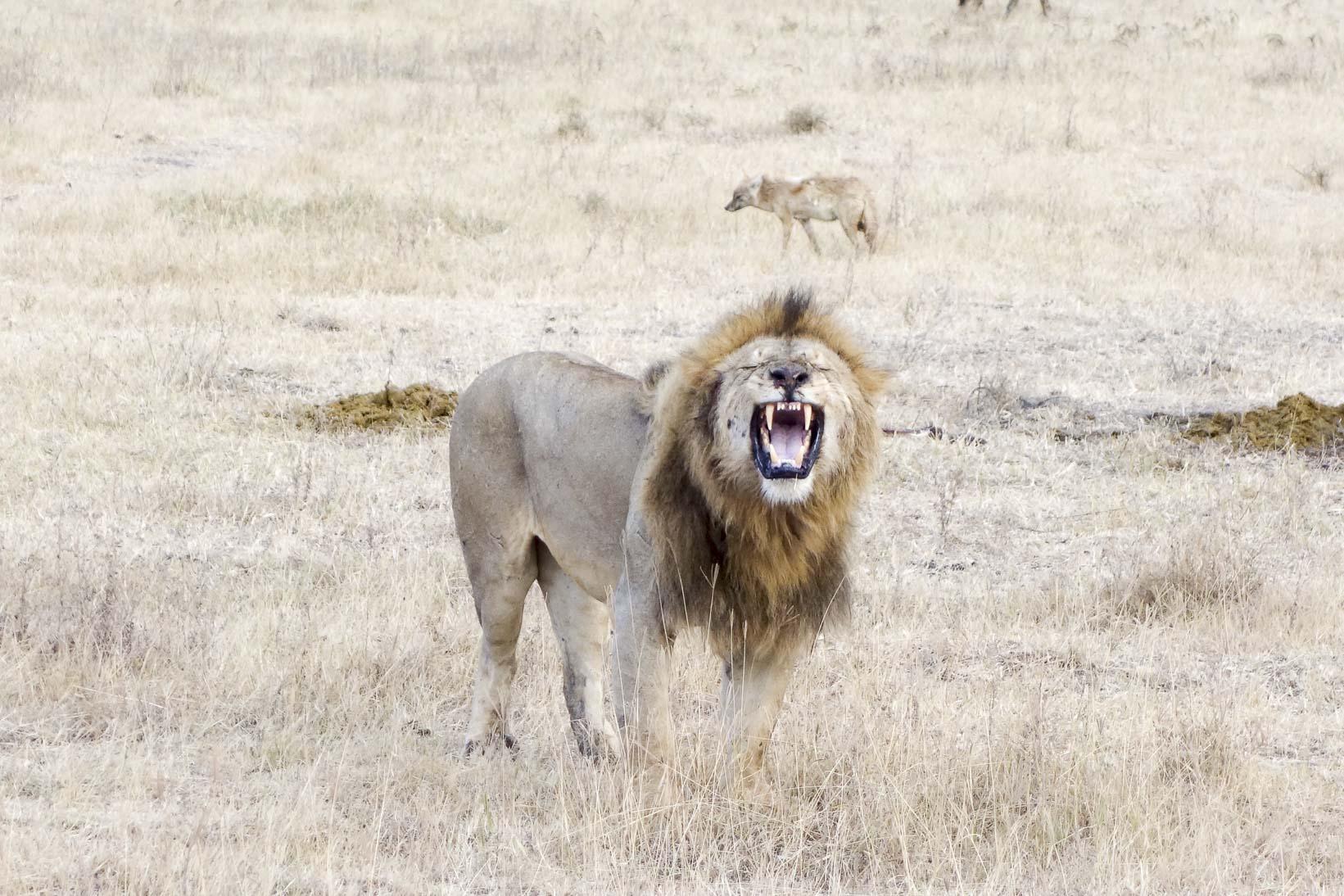 Die Serengeti und der Ngorongoro Crater
