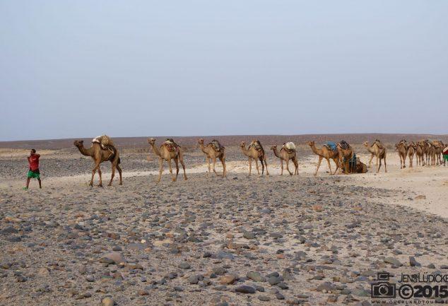 Die Kamelkarawanen durch die Danakil Depression