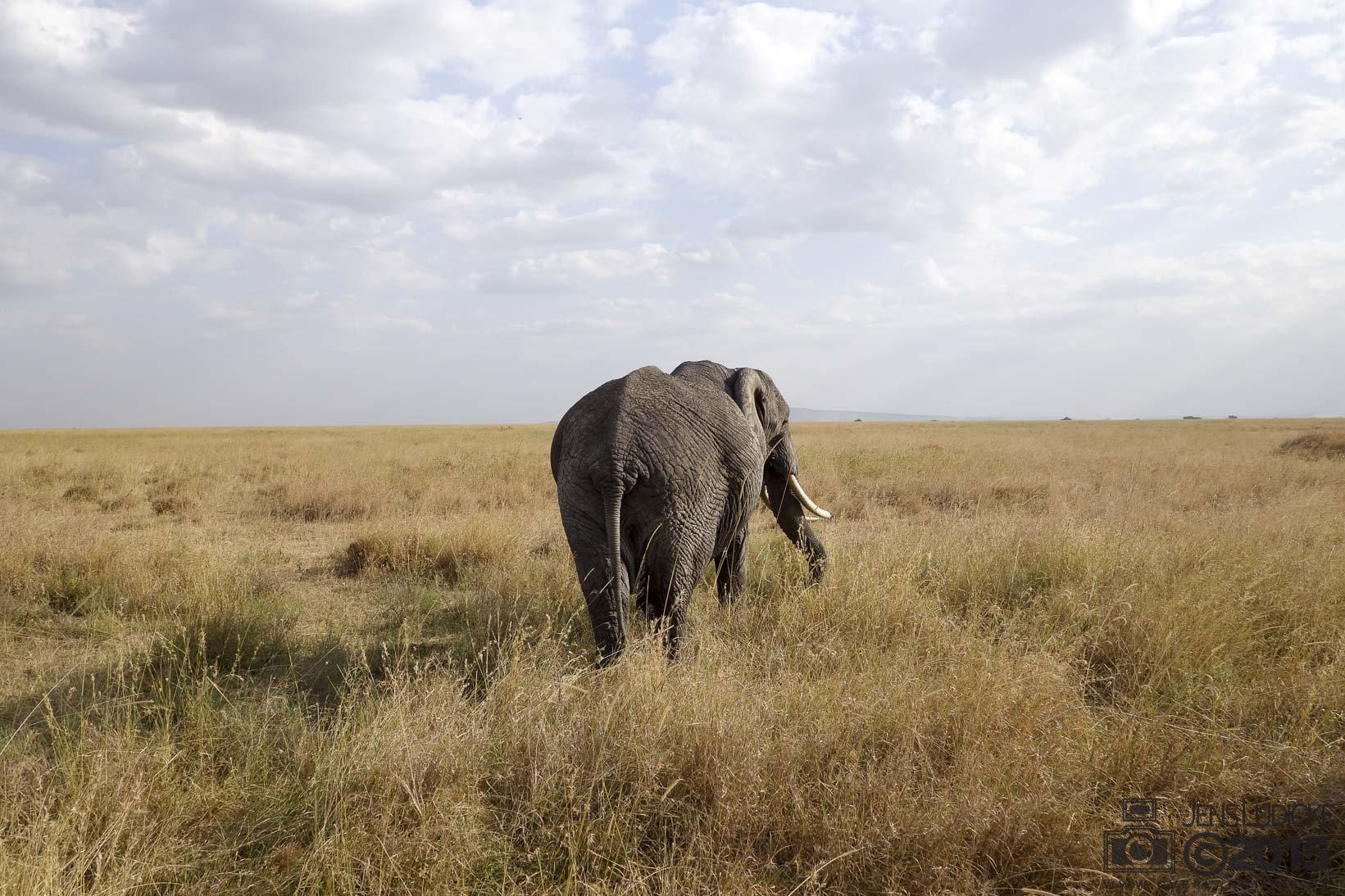 Eins der schönsten Bilder - Was für ein Elefant