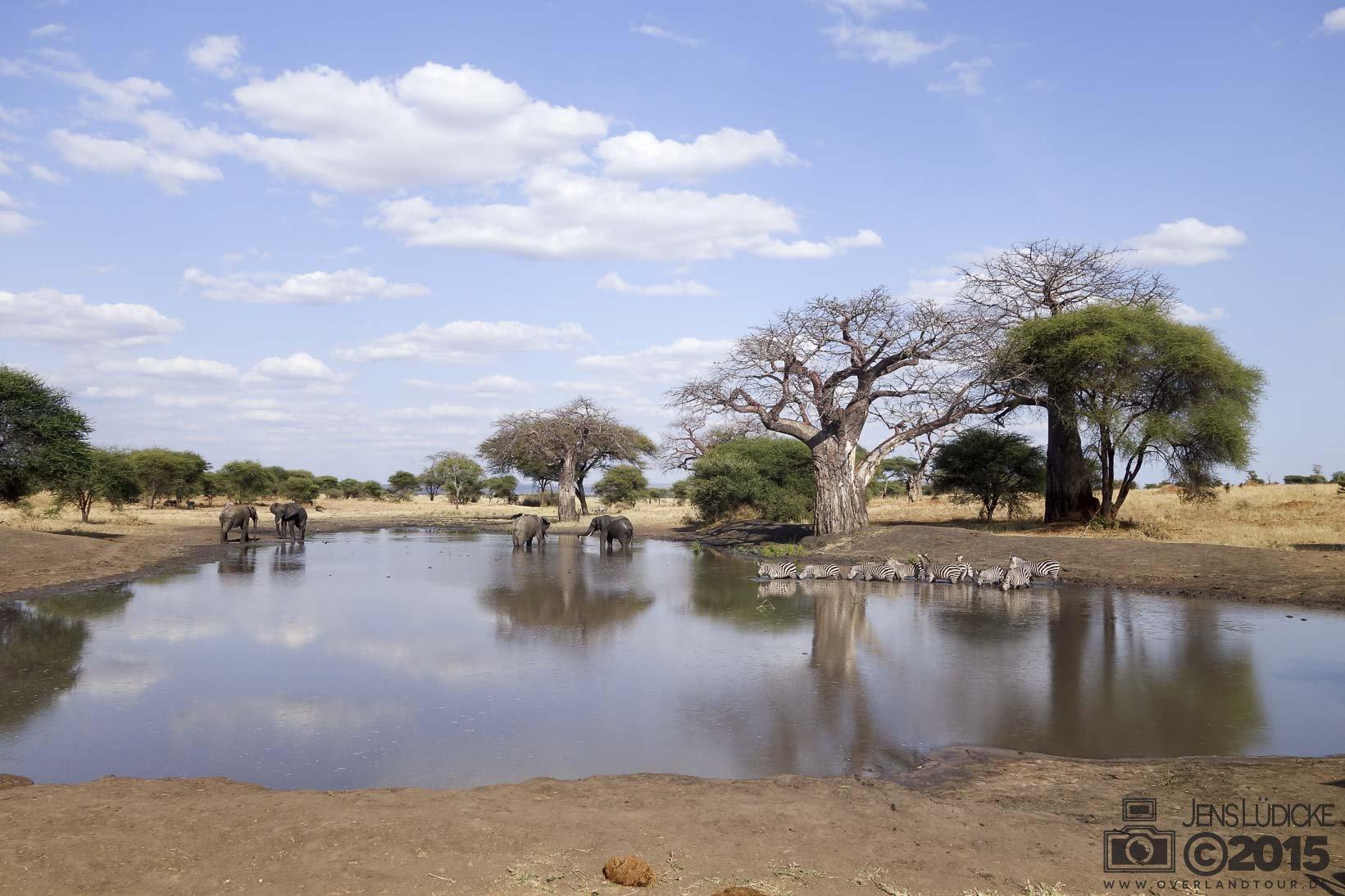Auf nach Moshi zur Safari