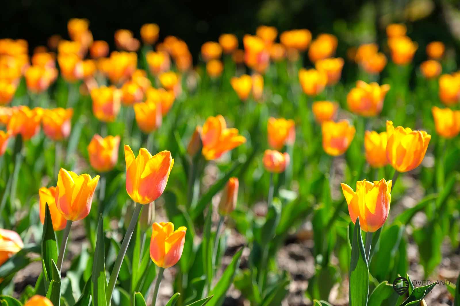 Von einheimischen Blumen bis exotischen Pflanze gibt es im Botanischen Garten