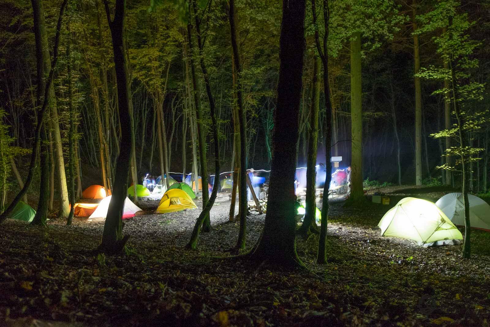 Nachts wenn der Wald zu leuchten beginnt