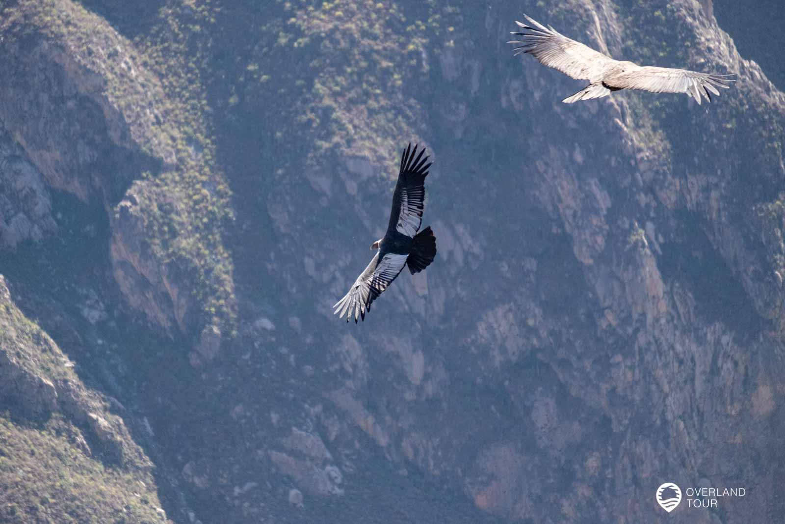 Colca Canyon Tour von Arequipa aus