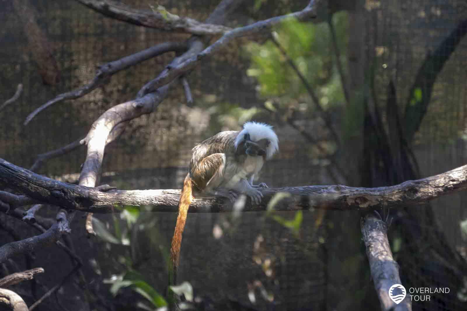World of Birds - Das Vogelparadies in Hout Bay