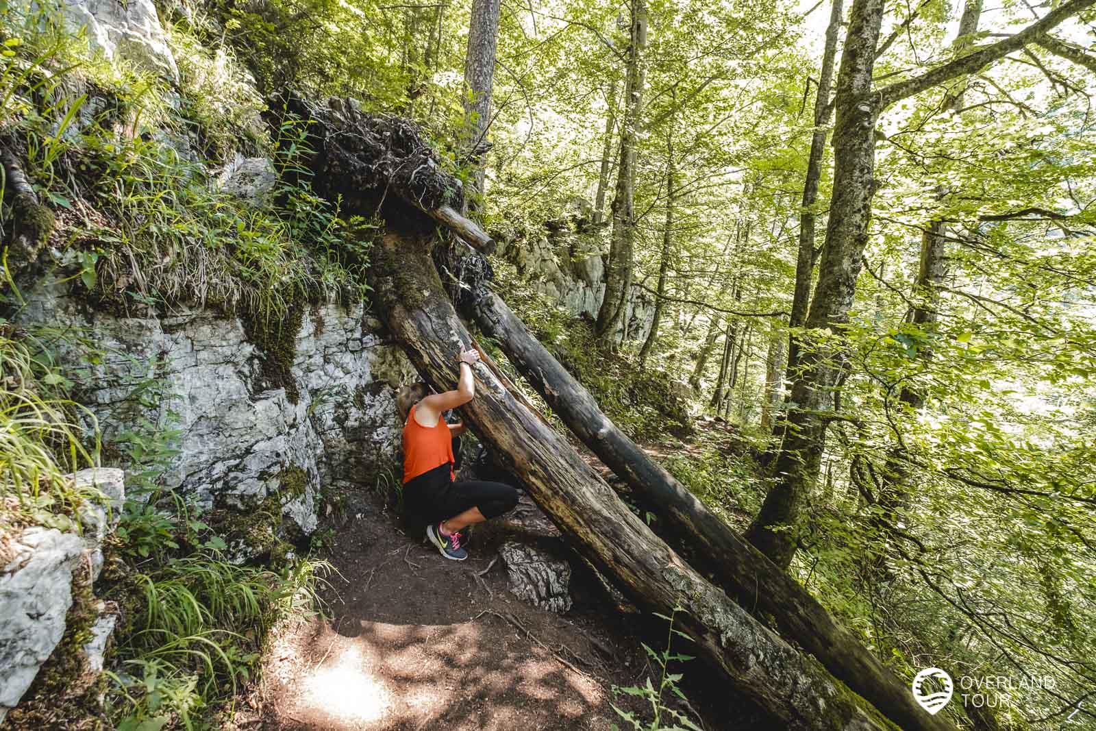 Auf dem Pfad durch den Wald zur Naturbadewanne