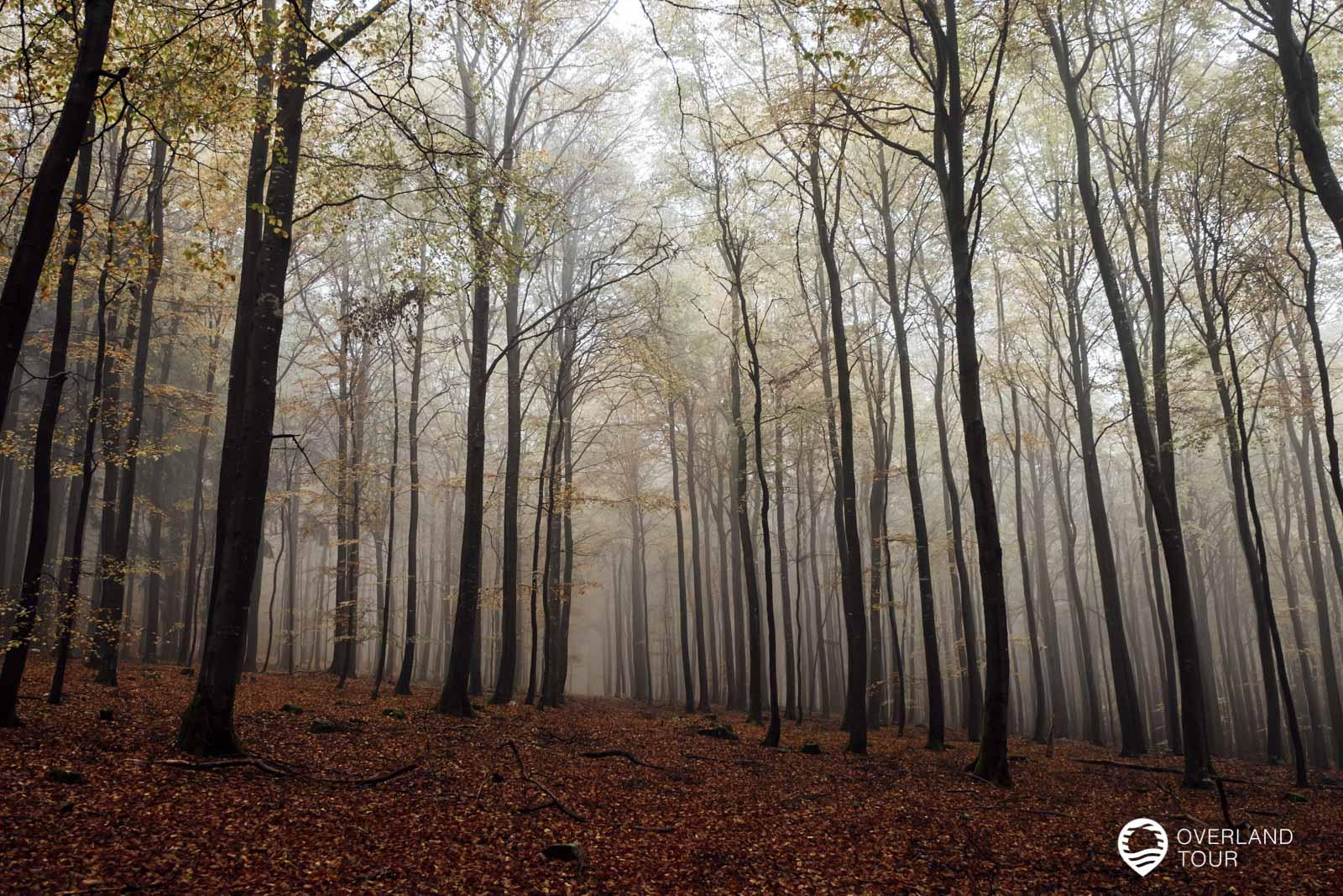 Mystisch ist der Nebel im Herbst! Wandern auf dem Saar-Hunsrück-Steig