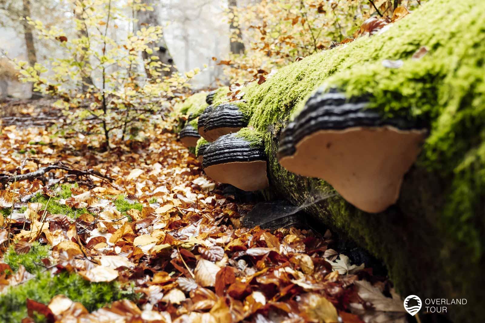 Wie sich der Wald verändert, wenn er zu einem Nationalpark wird. Die Moose und Pilze sind doch unglaublich
