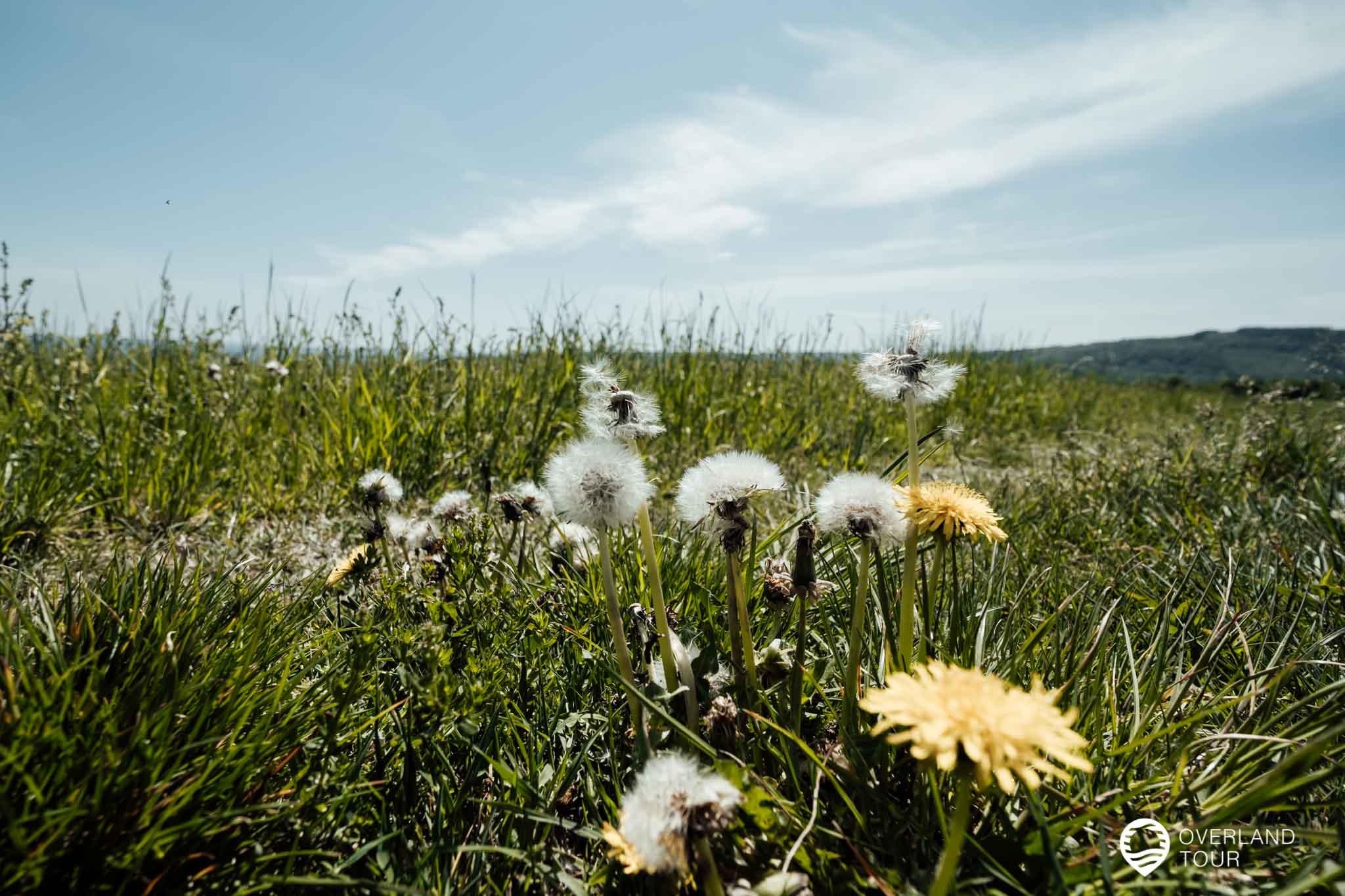 Hinter dem Aussichtspunkt Niederwald öffnet sich eine wunderbare Wiesenlandschaft
